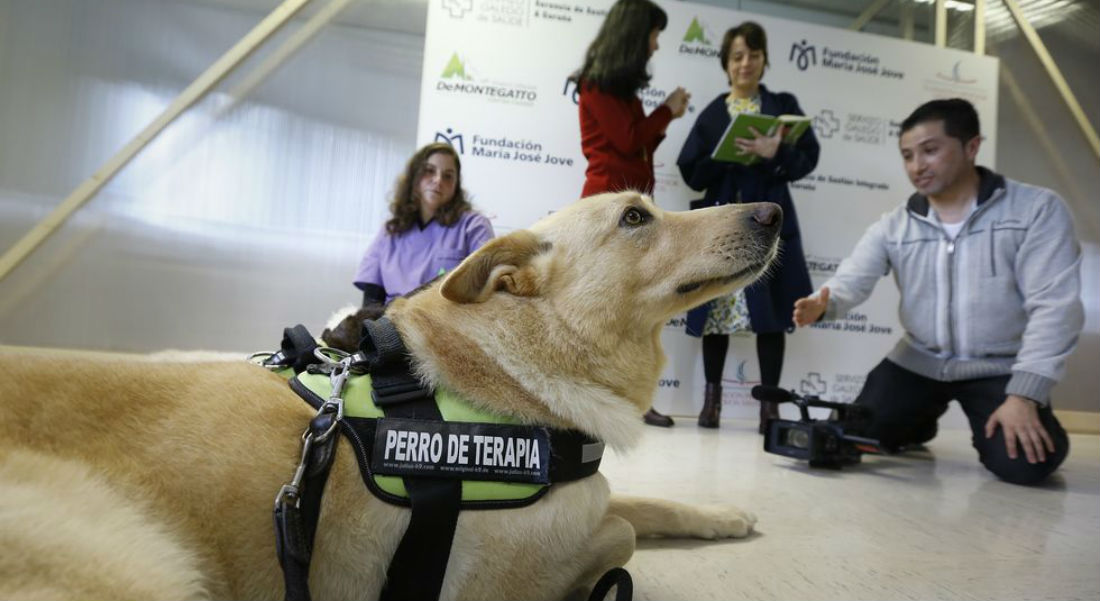 perros-para-terapias-autismo